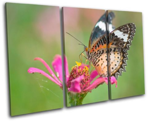 Butterfly Flowers Animals - 13-1561(00B)-TR32-LO